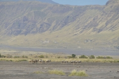 Shore Lake Natron 10